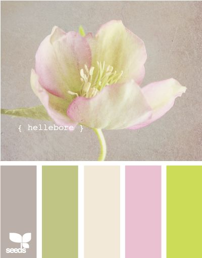 hellebore - This is pretty - has the green, pink and grey colours I am interested in...