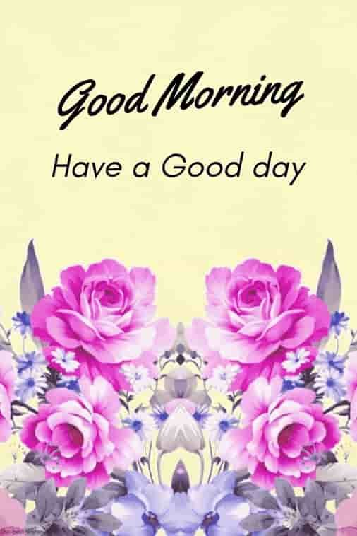 Best Good Morning Hd Images Wishes Pictures And Greetings Med