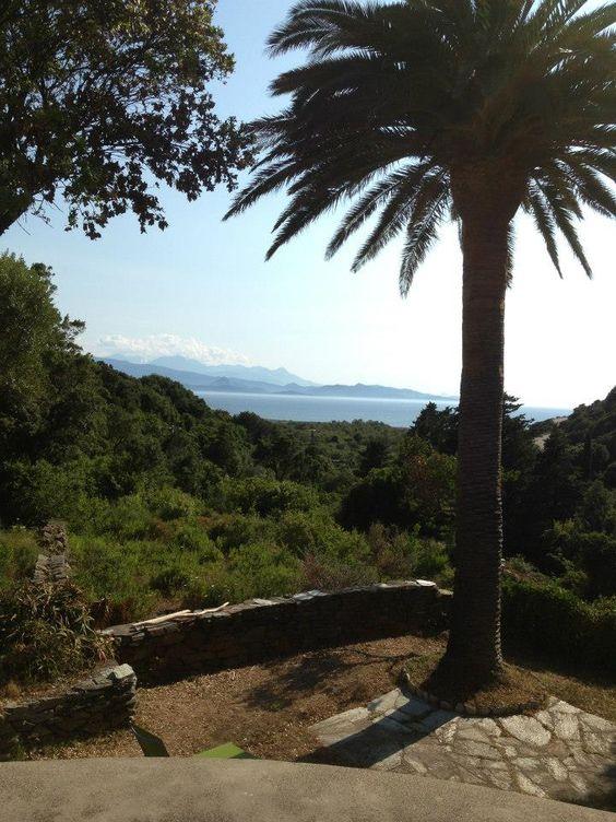 Palm tree and sea view Corsica - Palmier et vis à mer en Corse