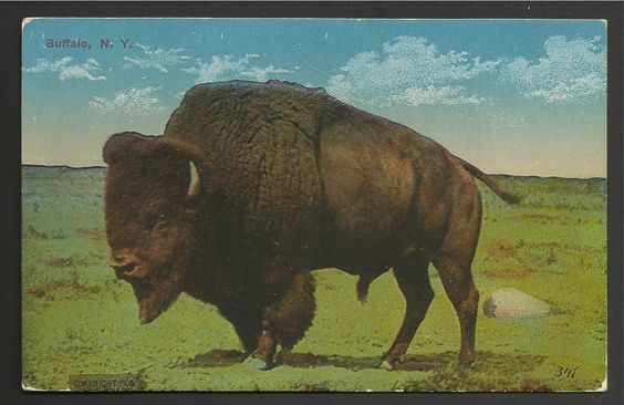 Vintage Linen Postcard  of a  Buffalo Standing in by TheToadsHouse
