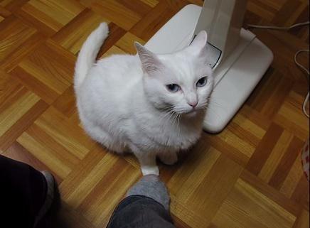 人気記事:【動画】踏まれるとそっと踏み返す猫 http://skaihahiroi.blog.fc2.com/blog-entry-610.html…