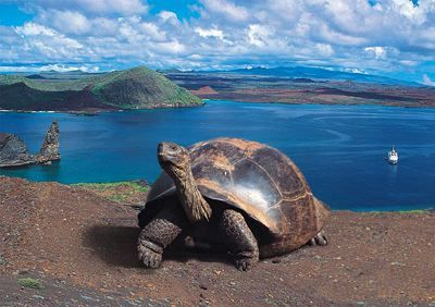 Ride on a tortoise back in the Galapagos Islands:
