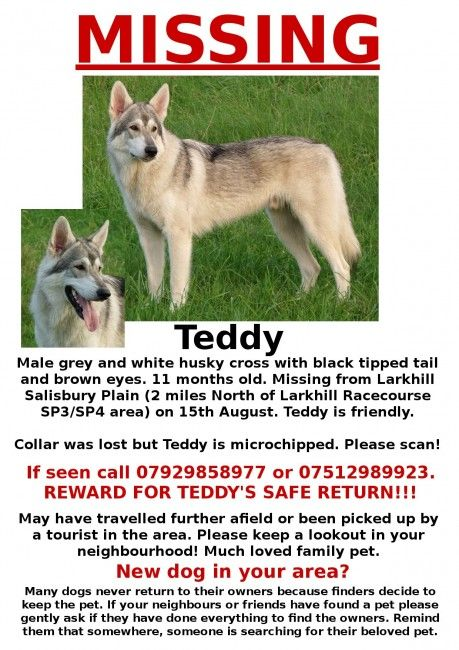 Have you seen this missing pet dog?