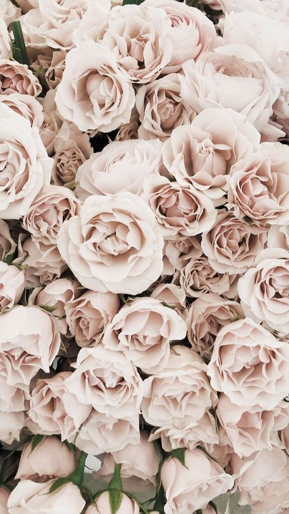 45 Beautiful Roses Wallpaper Backgrounds For Iphone Flower Aesthetic Beautiful Flowers Wallpapers Flower Wallpaper