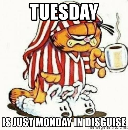 happy tuesday quotes funny