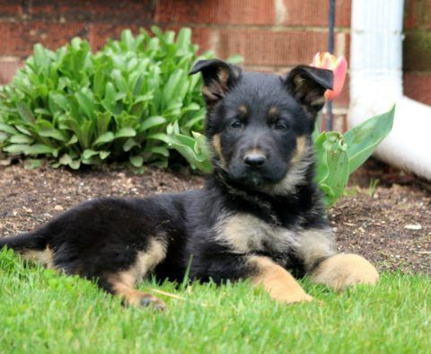 Puppy Finder Find Buy A Dog Today By Using Our Petfinder In 2020 Puppy Finder Buy A Dog Puppies