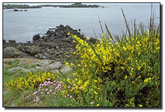 Chausey, la côte fleurie