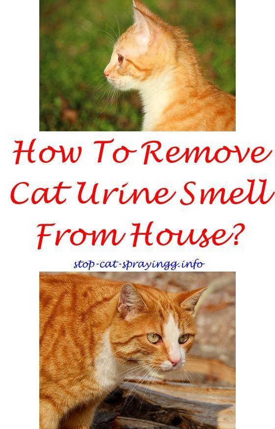 21693ab2dd11bf564421611b18f8815e - How To Get Rid Of Cat Spray Smell Under House