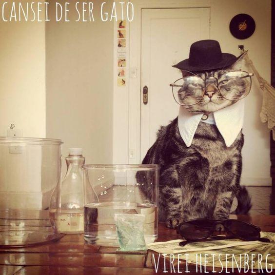 Cansei de ser gato - O gato Chico é pura fofura.