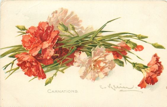 """Carnations"" by Catherine Klein."