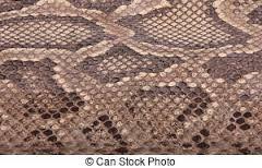 Resultado de imagem para pele de python