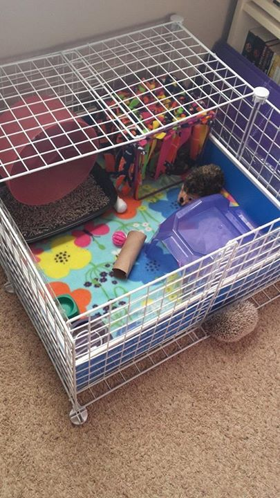 Hedgehog cages are so crafty What can I say other than I want a pet hedgehog.
