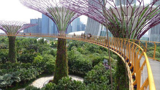 Những con đường để khách tham quan những Siêu cây