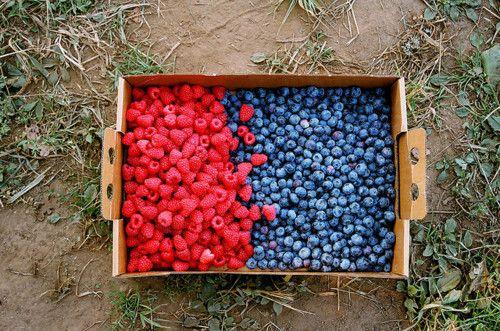 picking berries.
