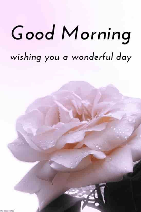 Best Good Morning Hd Images Wishes Pictures And Greetings Good Morning Wallpaper Good Morning Images Good Morning Images Hd