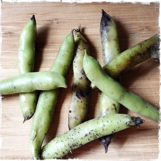 Local Fava Beans