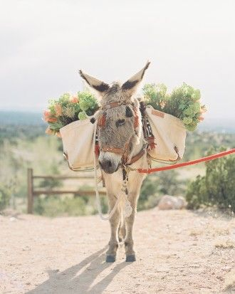 A VIB (Very Important Burro) named Freighter carried light bushels of amaryllis, viburnum, parrot tulips, and grevillea at Katherine and Jared's Santa Fe wedding. He was the most popular guest with the selfie-taking attendees.