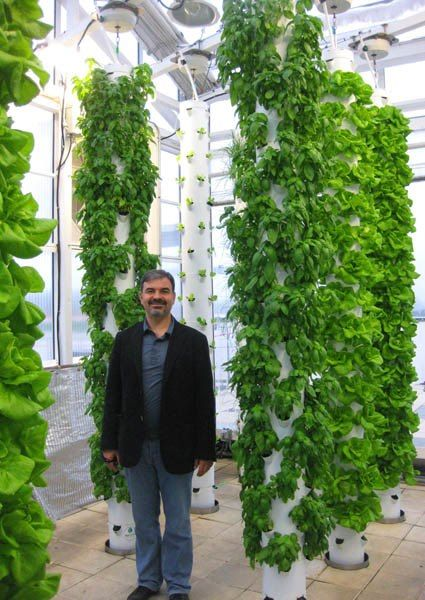 New England Aeroponic Tower Gardens  Look at the beautiful basil and Bibb lettuce after only 3 weeks in this Florida greenhouse Tower Garden