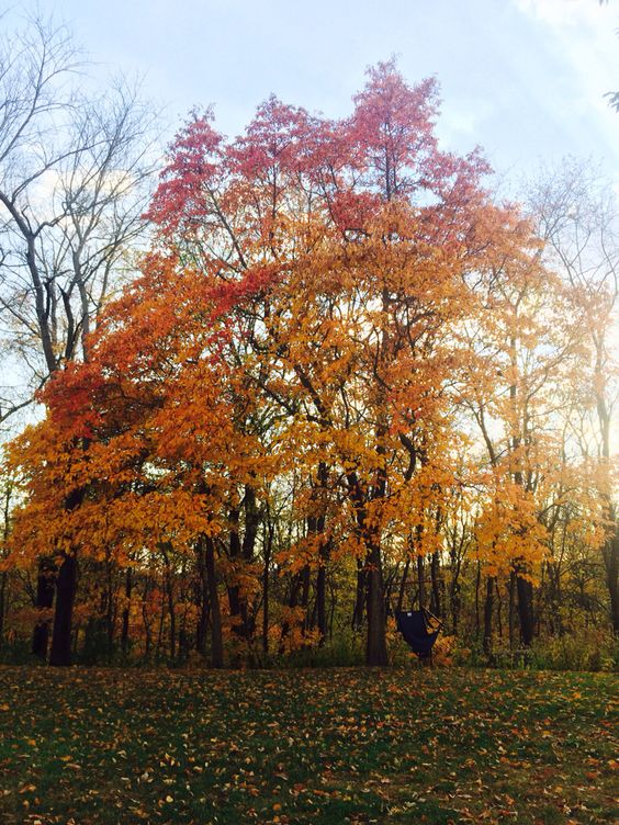 Fall is colorful