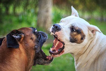 Dog Behaviourist Consultant in UK - http://www.dog-ramblers.co.uk/dog-behaviourist-consultant/  #DogBehaviouristUK