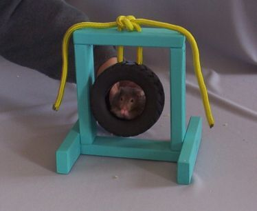 Need to hamsters and toys on pinterest for Hamster bin cage tutorial