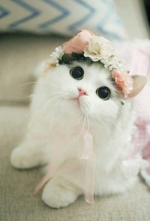 Who Can Resist A Kitty Cat Look Pretty Cats Baby Cats Cute
