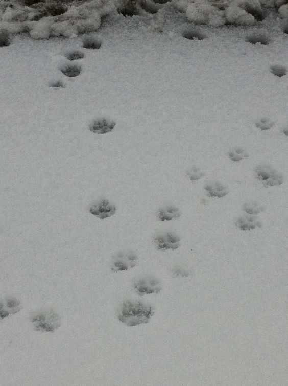 Footprints in snow on Southshore beach