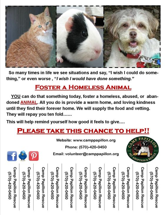 Please print and post around your area.  Please consider helping to save an animal by opening up your home.