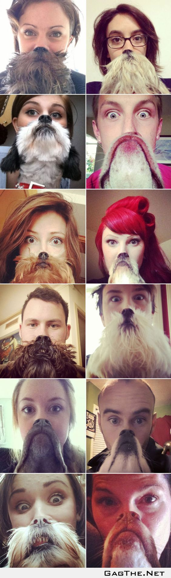 Some of the best dog beard pictures!