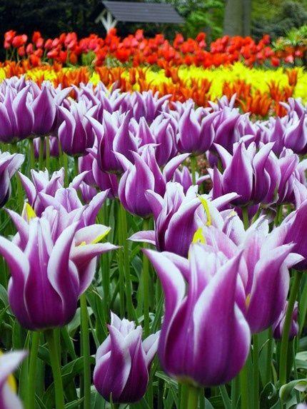 World's largest flower garden currently dazzling 2009 visitors;
