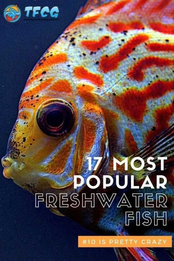 17 Best Freshwater Aquarium Fish Cool Fish With Pictures List Freshwater Fish Freshwater Aquarium Fish Freshwater Aquarium