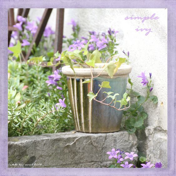 simple ivy | par odile lm