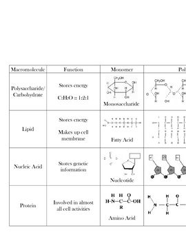 Worksheet Biomolecules Worksheet macromolecule chart biomolecules