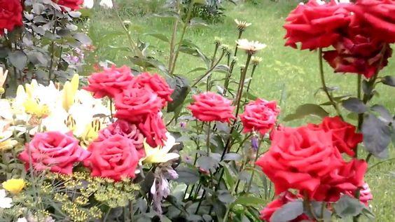 Сад цветов на севере Подмосковья(1)