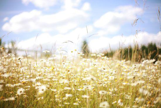 summer in oregon