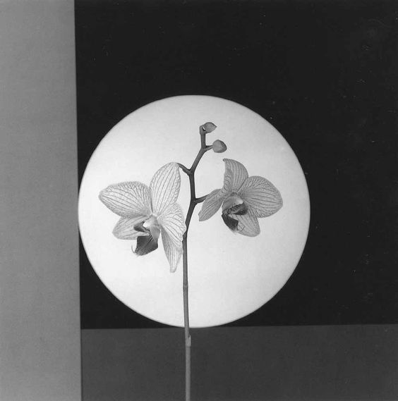 Les Artistes - Robert Mapplethorpe