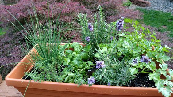 Deck Herb Gardening