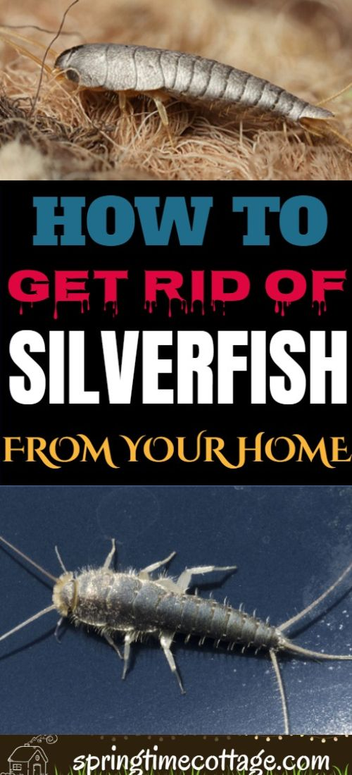 21ac10a028984e1cefea99fd15c81cf1 - How To Get Rid Of Silverfish In House Uk