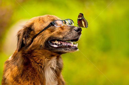 brino by Benaya Agung - Animals - Dogs Portraits ( natural light, playful, glasses
