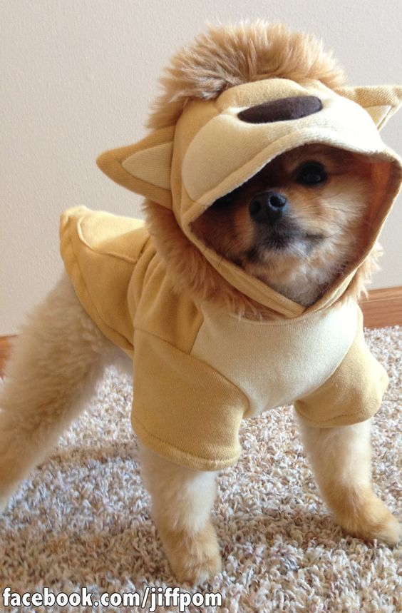 This Is The Cutest Dog You'll See This Halloween | Cute ...