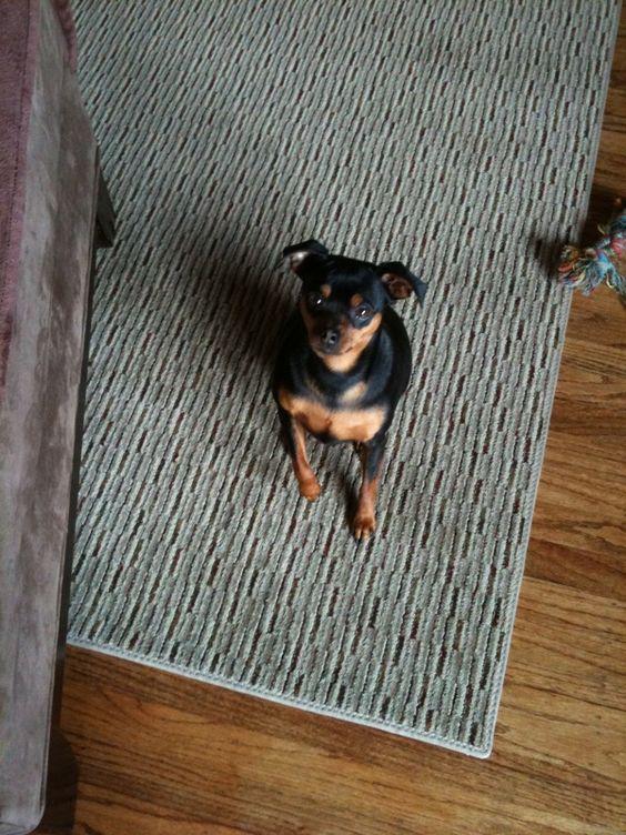 Riley the little sweetpea