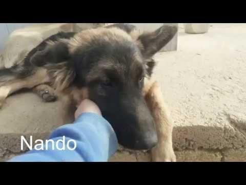 Pin Von Birgit Auf Hund2 In 2020 Ausgestopftes Tier Tiere