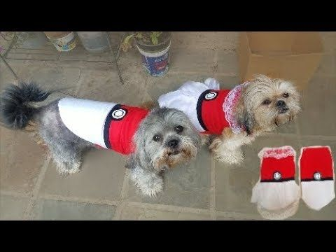 Youtube In 2019 Dog Pokemon Pokemon Costumes Diy Dog Costumes