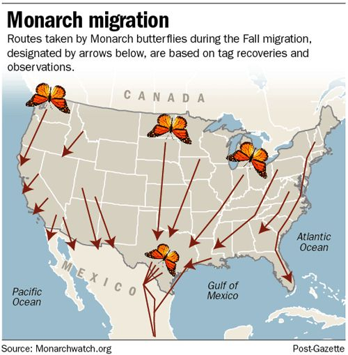 Image result for monarch butterfly migration