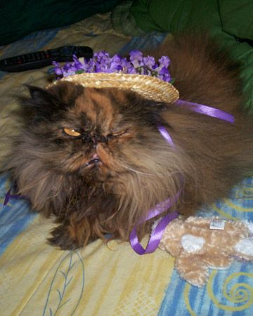 ****** cause you seem surprised at how good she looks in her hat | 30 Cats In Easter Hats