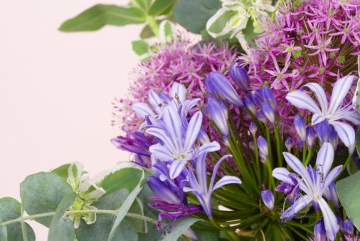 Is Agapanthus The Same Family As Allium Plants Companion Planting Agapanthus