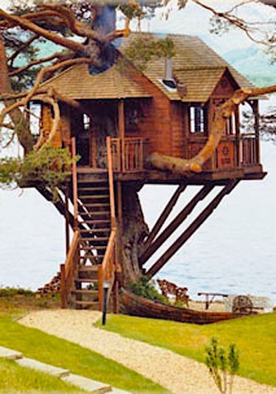 If You Need Me Today I Ll Be In My Tree House In 2020 Cool Tree Houses Tree House Tree House Designs