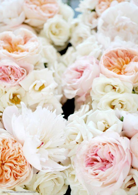 Blush Peonies Peach David Austin Garden Roses Light Pink