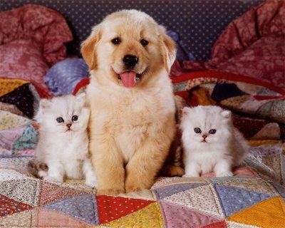 Resultado de imagen para imagenes de perritos y gatitos tiernos bebes
