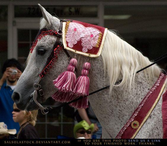 Arabian Parade HS 2 by SalsolaStock.deviantart.com on @DeviantArt